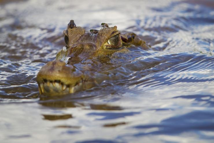 8315a01feb2f81 Croc Belly Yields Human Remains