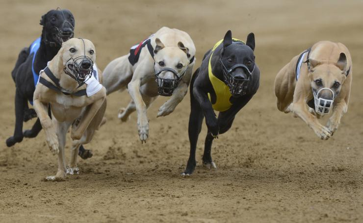Greyhound Live Baiting
