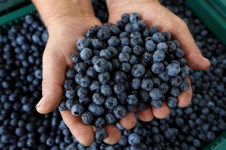 Blueberry Tea Is Being Studied for Diabetes Treatment