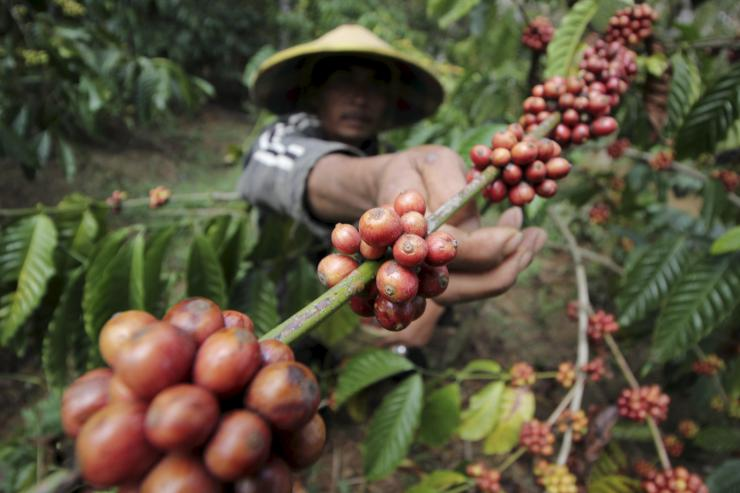 Global demand for coffee squeezes poor farmers, water supply in