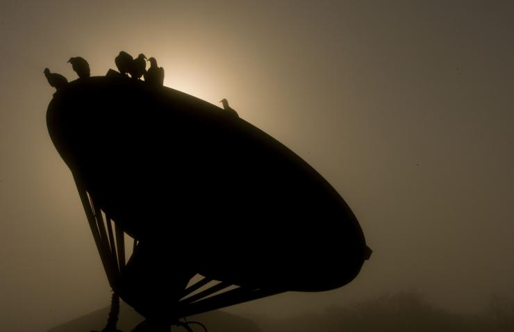 Birds sit on top of a satellite dish as heavy fog envelops the Kennedy Space Center in Cape Canaveral, Florida