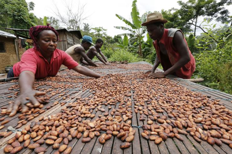 Cocoa workers in Ghana