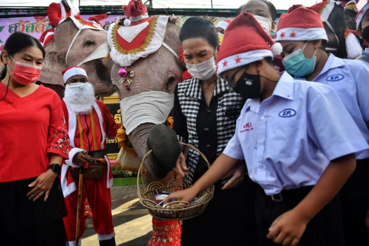 The Christmas visit by the elephants is an annual tradition that has taken place for 17 years