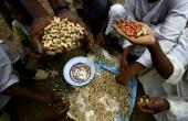 Sudanese farmers display their harvest of peanuts, a key crop hit by a government export ban