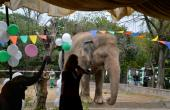 'Do You Believe': Pakistan Elephant Set For Flight After Cher Campaign